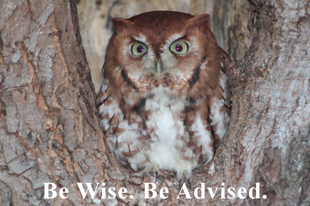 Skipper Advising Resource Center Owl
